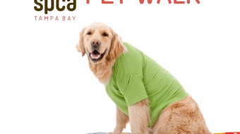 "Golden retriever on an orange surfboard with a ""SPCA PET WALK"" banner"