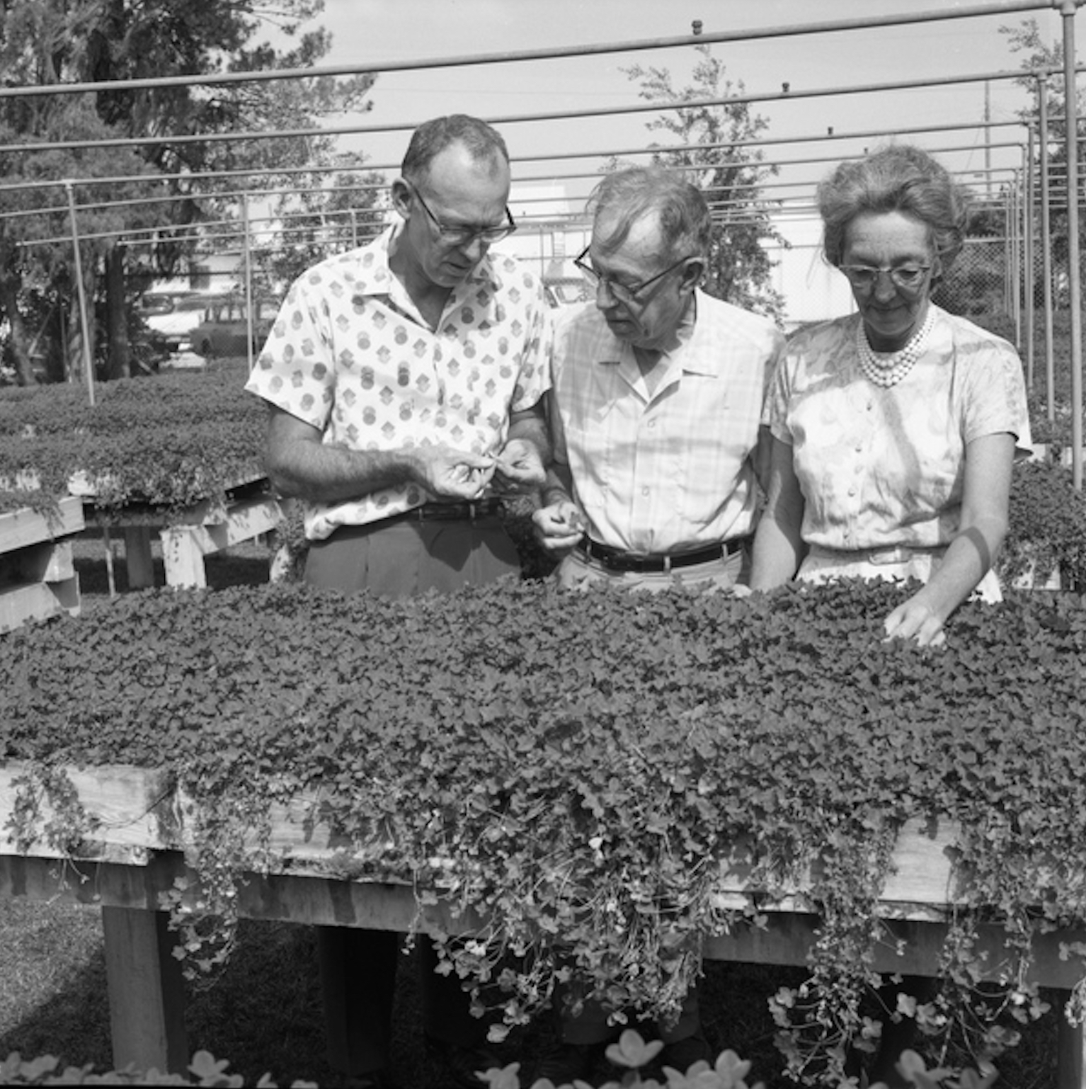 A black and white photo of two men and a lady looking at a clover patch