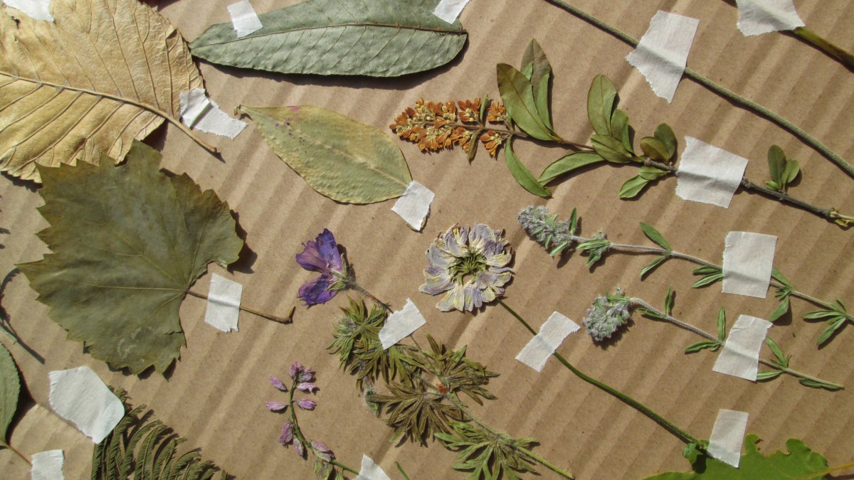 Pressed flowers on cardboard