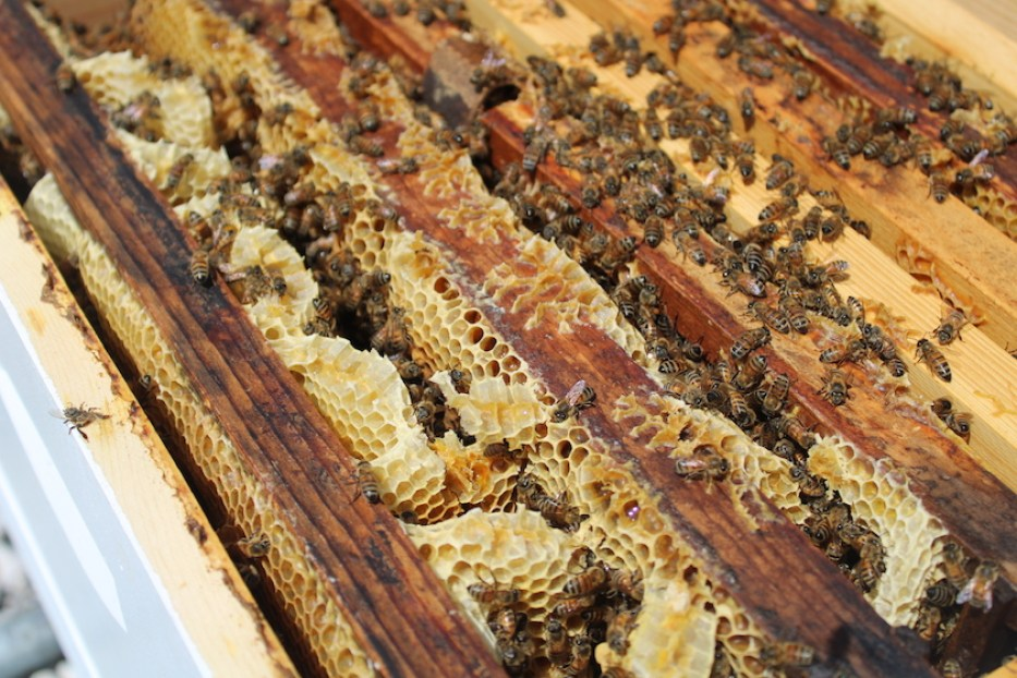 Bees in an artificial wooden hive