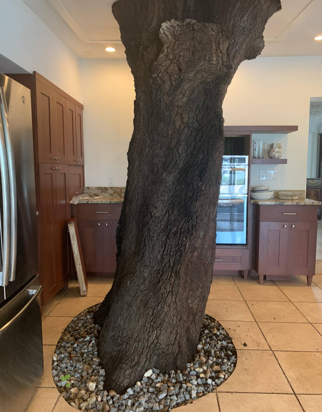 A photo of a kitchen with a large oak tree growing in the center of it.