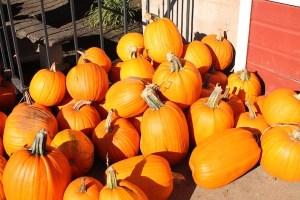 A huge pile of bright orange pumpkins