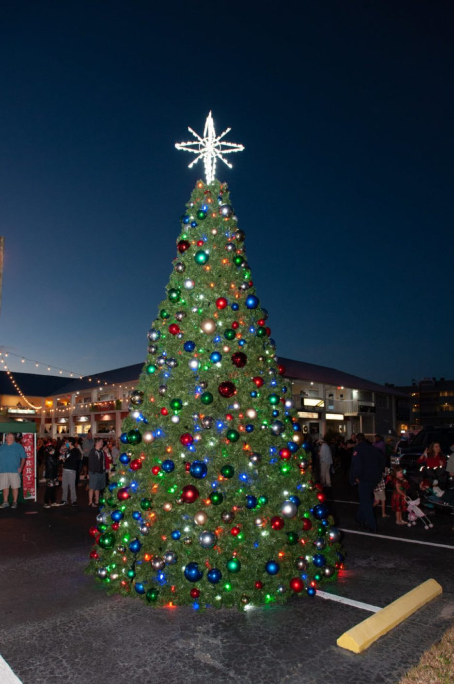 A photo of a large lit Christmas tree with a white star on top at night.