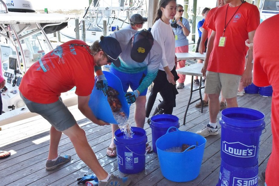 FWC Reef Rangers sort lionfish catches. Photo courtesy of the Florida Fish and Wildlife Conservation