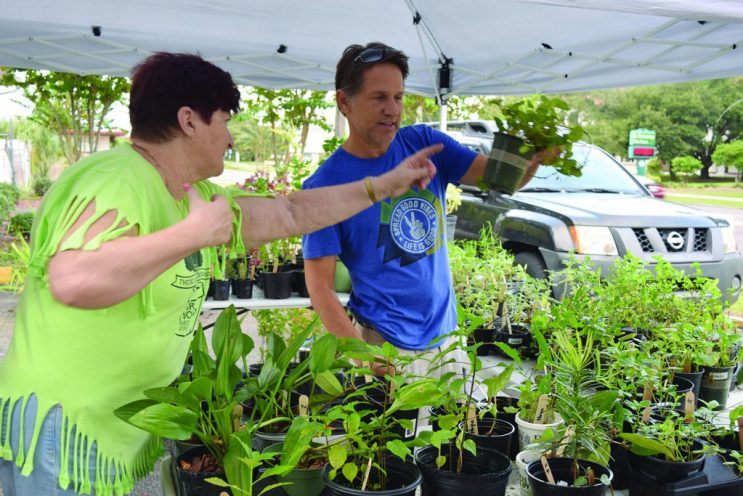 """Sue Heyen, left, a member of Historic Kenwood's Garden Workshop, helps a customer at the neighborhood's 12th annual fundraising plant sale at the Bula Kafé on Saturday, October 15. """"We grow them ourselves in our yards,"""" Heyen said. """"We grow them all year for the next sale."""" Proceeds go to local charities that help children and families."""