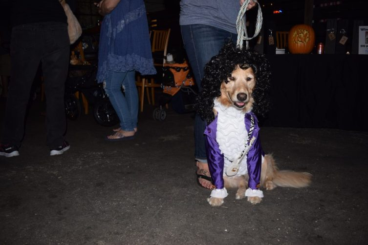 """Olive the golden retriever, aka Prince, is dressed for the Halloween costume contest at the sixth annual Party for the Paws held Saturday, October 22, at Cage Brewing Co. in St. Petersburg. The event, which celebrated Halloween and the fall season, was a fundraiser for the Pet Pal Animal Shelter and also included raffles, food, drink, vendors and activities for kids. Olive's owner, Brandy Arnold of Dunedin, said she made the costume herself as """"a tribute, since we lost Prince this year. It's his Purple Rain outfit."""" The costume included a black wig and a miniature replica of Prince's guitar that she bought on eBay. Arnold said Olive loves the attention she gets wearing her costumes, which Arnold makes once a year. """"If I put out a shirt, she jumps into it head first,"""" she said."""