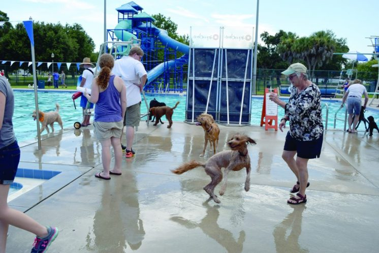 "Goldendoodle Zoe, center, spins around as her owner, Mary Cummings of Clearwater, throws her ball towards the pool. ""She loves to swim,"" Cummings said. ""She lives to swim!"""