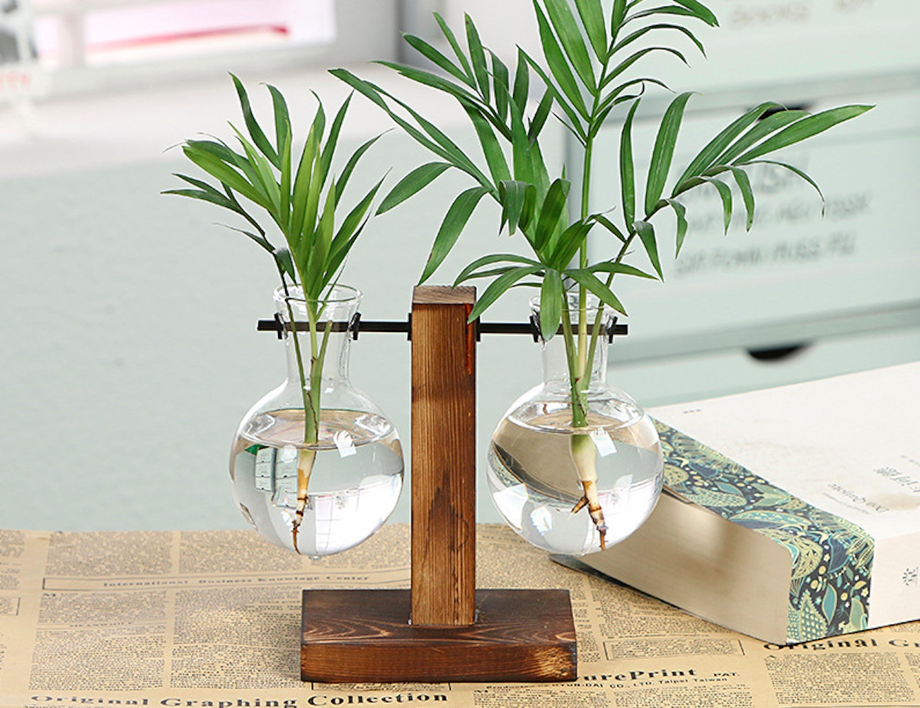 Plants Can Grow Water Vases
