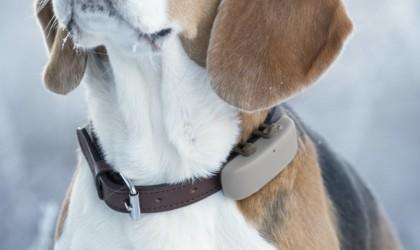 Tractive pet GPS tracker