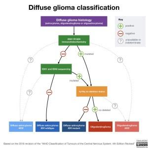 Glioma Classification