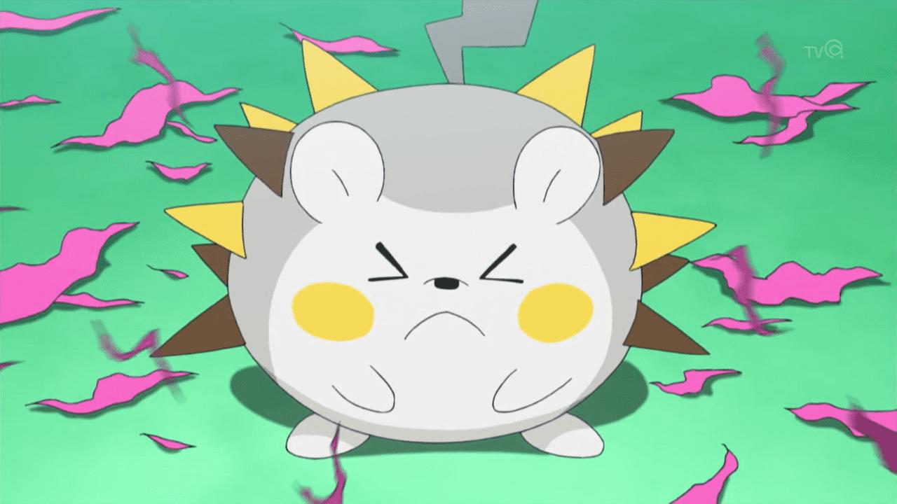 Pokemon togedemaru steals the show