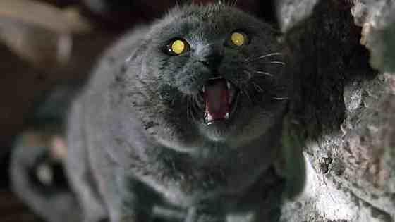pet sematary cat 1989