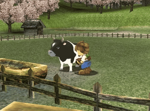 boy milking cow