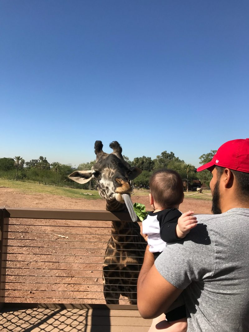 Family Zoo Day at the Phoenix Zoo - feeding giraffes