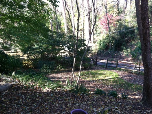 The site chosen was a little glade at the bottom of a slope in a grassy area