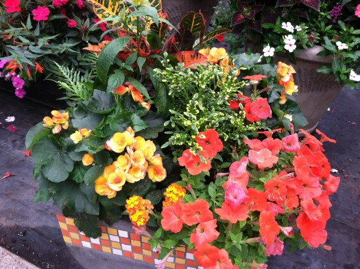 Found at a local nursery by my friend Millie-The orange and reds pick up the container colors