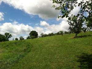 Blueberry bushes on a hillside