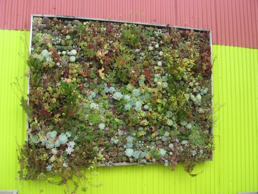 Planted wall with succulents