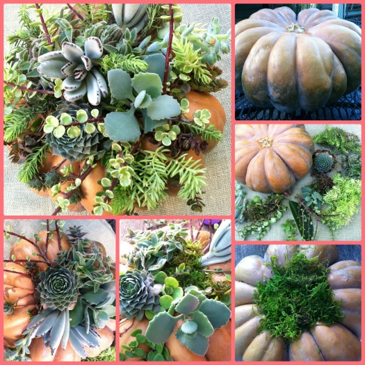 Pumpkin decorated with succulents