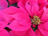 Longwood Christmas 2013 091
