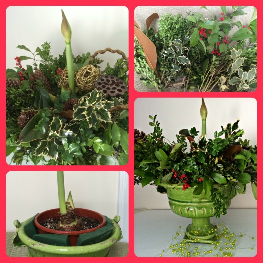 Creating a centerpiece with amaryllis