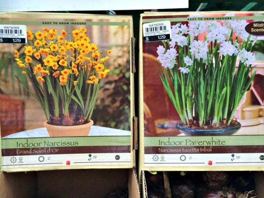 Types of Paperwhites