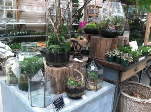 Terrarium container ideas