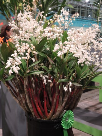 Philadelphia flower show 2014 163