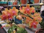 Philadelphia flower show 2014 165