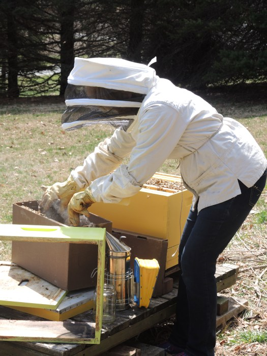 Transferring 5 frames from a Nuc hive into my hive body