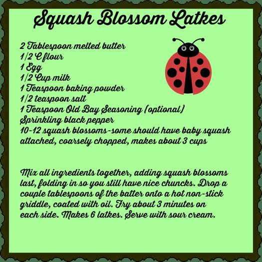 Squash blossom latke recipe