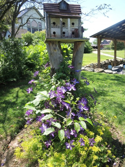 Clematis at base of bird house