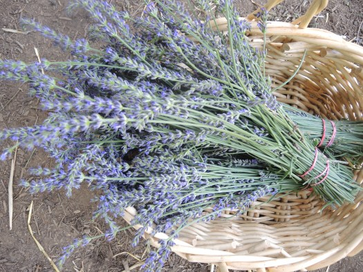 The ultimate edible flower-lavender