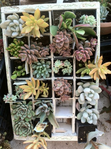 Array of colorful succulents