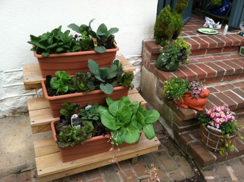 Growing edibles in easily accessible, self watering containers is very popular
