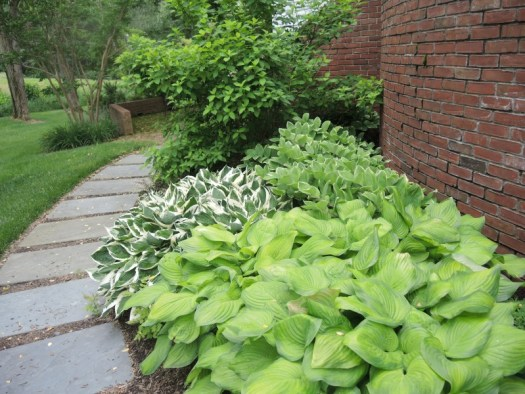 Base of the steps plantings