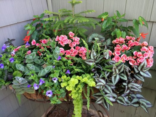 All three types of plants are used in this standing windowbox, thriller, fillers, and spillers