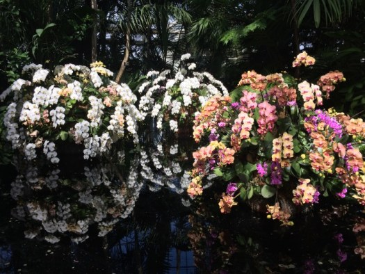 Floating islands of orchids greet you at the entrance of the Conservatory