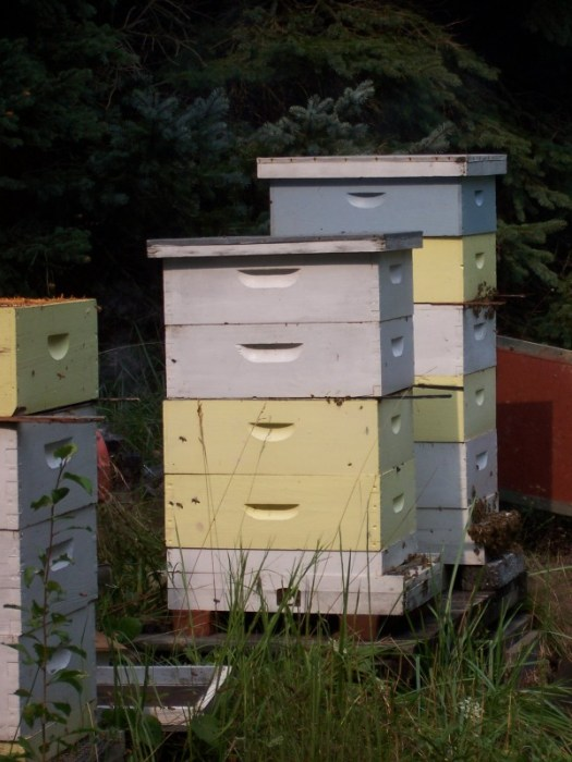 Give the bees lots of room