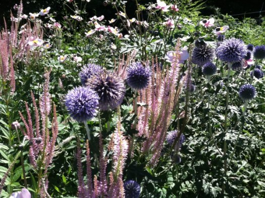 Culver's Root 'Lilac Towers'