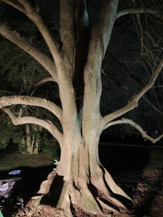 Many large mature trees surround Hampton Mansion