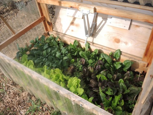 My cold frame vents in the rear when the temperature gets too high inside