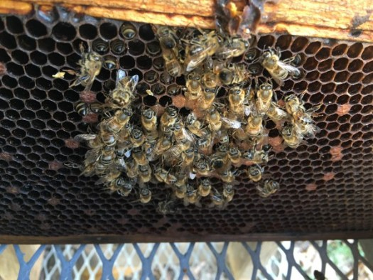 There is nothing more discouraging than opening a dead hive in the spring