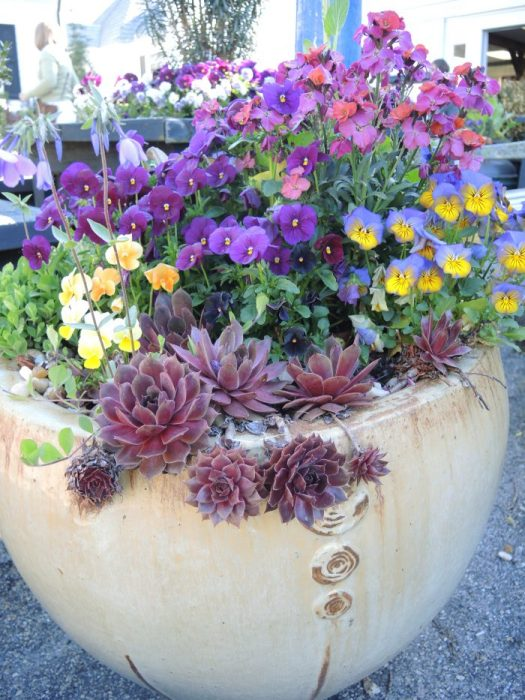 Beautiful containers dot the grounds at Ladew