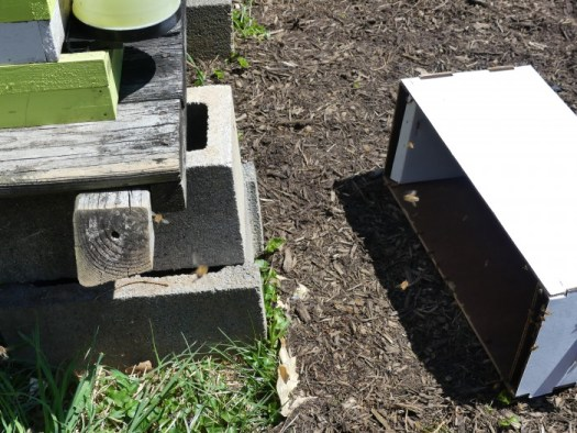 Lay the Nuc box on its side in front of the hive so the stragglers can enter the hive