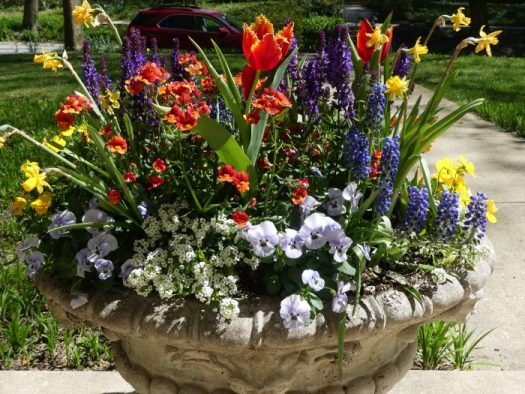 Early spring container by Leigh Barnes