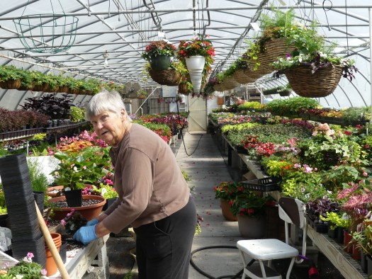 Jo Troy, owneer of Blooming Hill Greenhouse