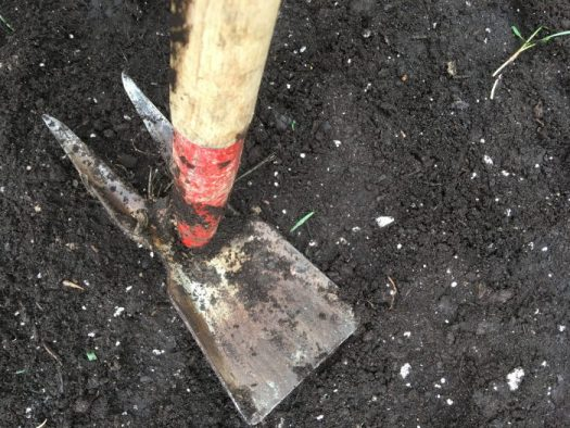 Firm the seeds into the soil with a hoe and water lightly
