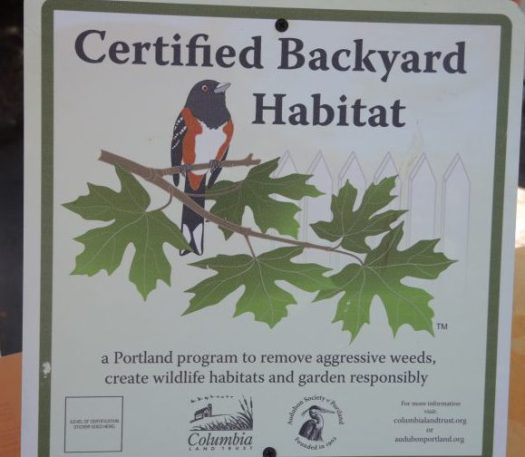 Every certified backyard habitat has a variety of plants-pollinator attracting ones and evergreens that shelter animals