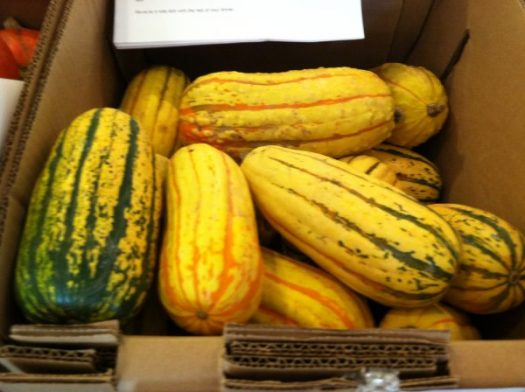 Delicata is anouther favorite, with nutty flesh, which is not as sweet as Kaboucha or Butternut